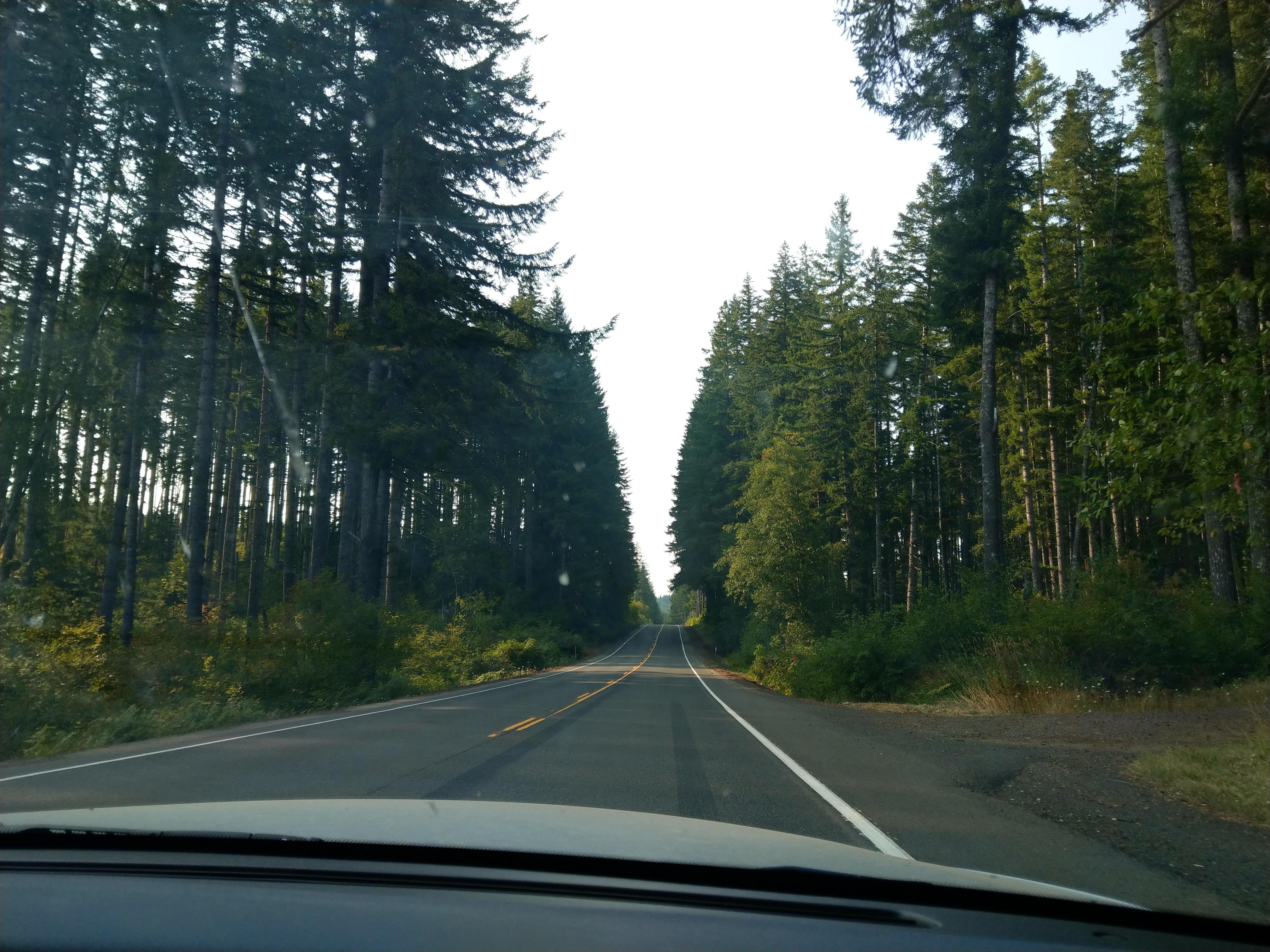 Oregon greenery