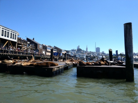 San Fran Seals